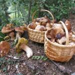 Àrea de Productes Forestals No Fusters