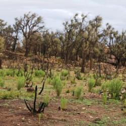 Àrea de Biodiversitat